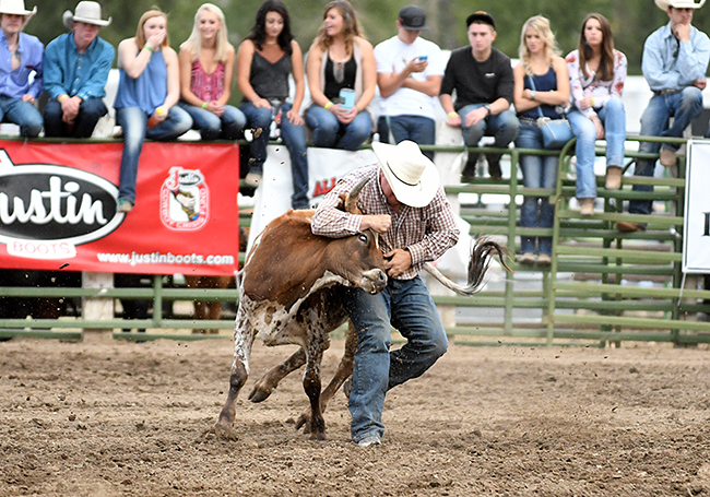 Payden McIntyre wrestles his steer to the ground in 4.3 seconds to win the bulldogging title at this year's Cattlemen's Days PRCA Rodeo. (PHOTO BY ROBBY FREEMAN)
