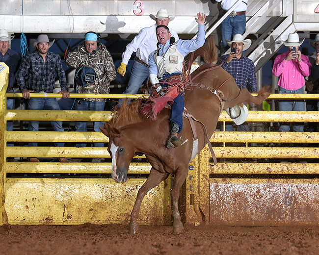 Bill Tutor rides Pete Carr's Classic Pro Rodeo's Good Time Charlie for 87.5 points Saturday night to win the bareback riding championship at the Lea County Fair and Rodeo in Lovington. (PHOTO BY PEGGY GANDER)