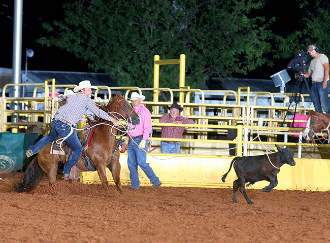Caleb Smidt ropes his calf Thursday night, and stops the clock in 7.8 seconds to take the second-round lead in tie-down roping at the Lea County Fair and Rodeo. He also sits fourth in the aggregate race. (PHOTO BY PEGGY GANDER)