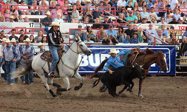 Tyler Waguespack transitions from Scooter, the 2017 Steer Wrestling Horse of the Year, onto his steer during Wednesday's performance of the Dodge City Roundup Rodeo. He leads the rodeo with a two-run cumulative time of 8.7 seconds after the first performance.