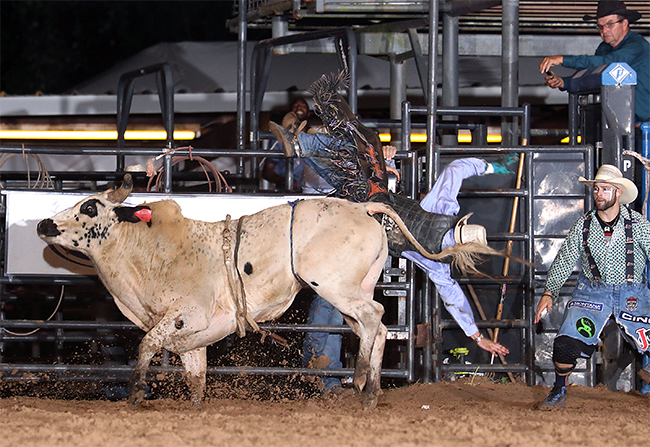 J.T. Moore of Alvin, Texas, is bucked off his re-ride bull on Saturday night in Bellville, Texas. After scoring 80 points on his first bull and being offered a re-ride, Moore gambled to make an additional $800; instead, he left with zero. That's part of the gamble cowboys make, but it didn't pay off Saturday. (PHOTO BY PEGGY GANDER)