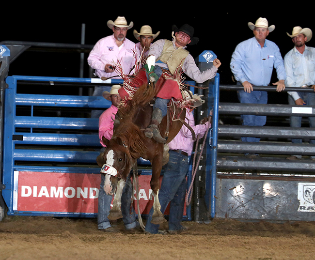 Tim Murphy rides United Pro Rodeo's Buckle Up for 81.5 points Friday night to take the bareback riding lead at the Austin County Fair and Rodeo. (PHOTO BY PEGGY GANDER)